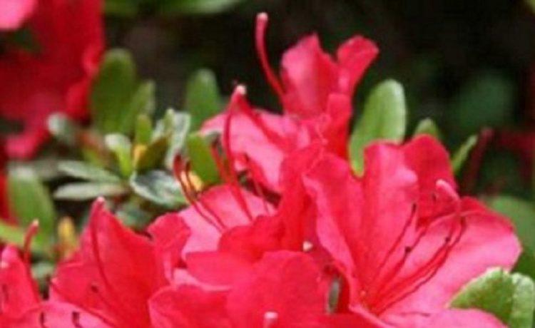 Bloeiende planten voor in je tuin
