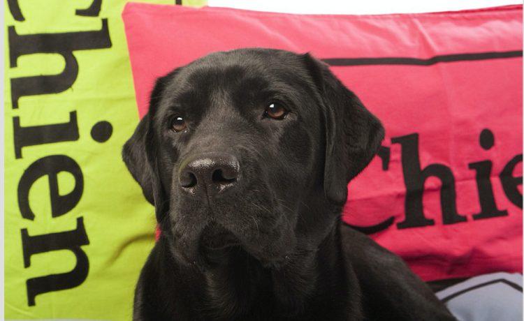 Een hondenbed dat wél past bij jouw interieur