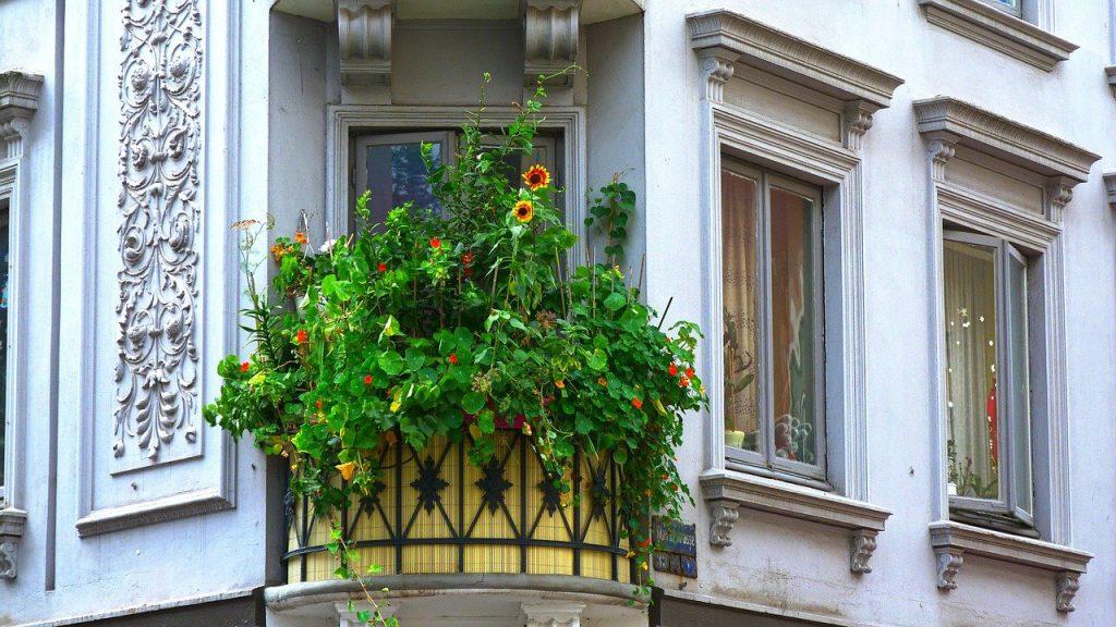 balkon planten